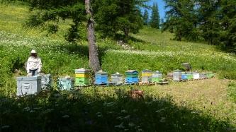 L'apiculture aux Orres : vente de miel_1