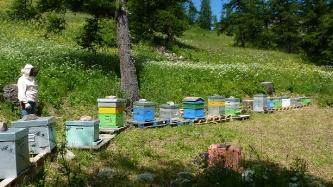 L'apiculture aux Orres : vente de miel_2