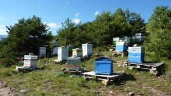 L'apiculture aux Orres : vente de miel_4
